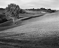 &quot;Tuscan Tree&quot;<br />
