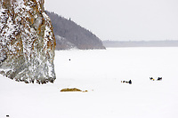 Warren Palfrey runs down the Yukon river as he leaves Ruby on Saturday morning during the 2008 iditarod