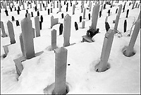 Kosevo cemetery. During the siege of the city in the early 1990&iacute;s the deceased were buried wherever there was space. This cemetery was once part of the grounds for the Winter Olympic Games held in 1984. Sarajevo, Bosnia-Herzegovina, December 1999 &copy; Stephen Blake Farrington<br />