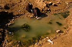 Iraqi women gather drinking water from a small pool on the outskirts of Baghdad. The lack of drinkable water has become a major source of illness in Iraq.