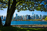 A singular majestic tree in Stanley Park seems to hang over the waterway and skyscrapers in  Vancouver, B.C, Canada on a beautiful summer day.