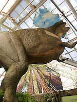 Dinosaur, T. rex going through roof of San Francisco Conservatory of Flowers Plantosaurus exhibit with Saxon Holt photo murals, redwood trees