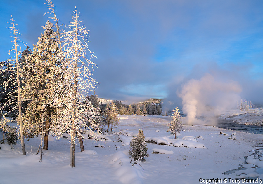 Yellowstone National Park, Wyoming:<br /> Winter dawn light on frosted &quot;Snow Ghost&quot; trees and thermal activity along the Firehole river