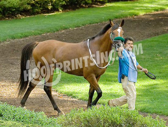 Chachie before The Alec Courtelis Juvenile Arabian Stakes at Delaware Park on 7/9/12