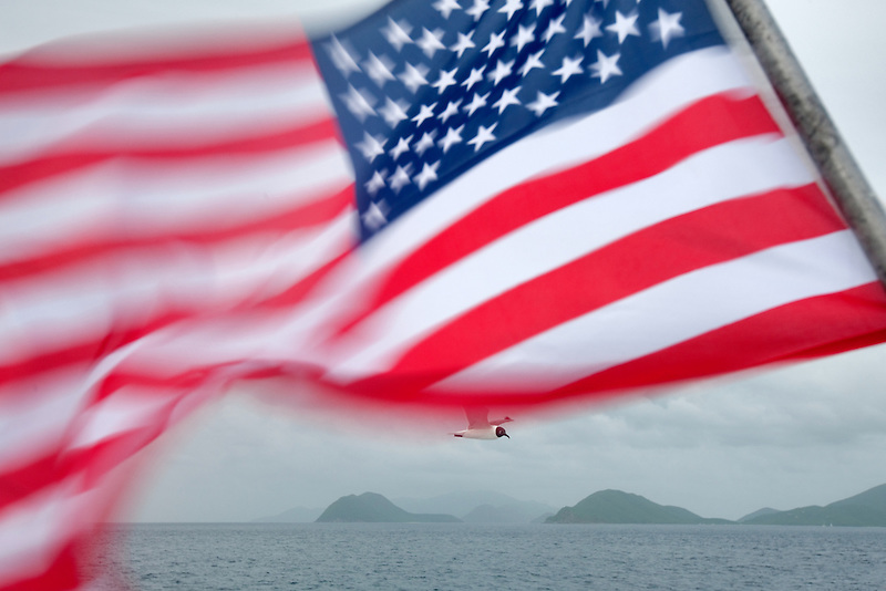 American flag with Venevualan laughing gull. Virgin Islands