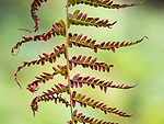 Graphic view of fern leaf study in fall.