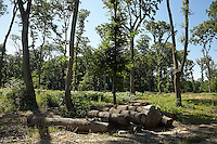 FOREST_LOCATION_90099