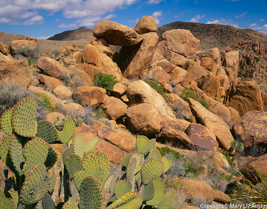 Big Bend National Park, TX<br /> Prickly pear cactus and rock window formation in the Grapevine Hills