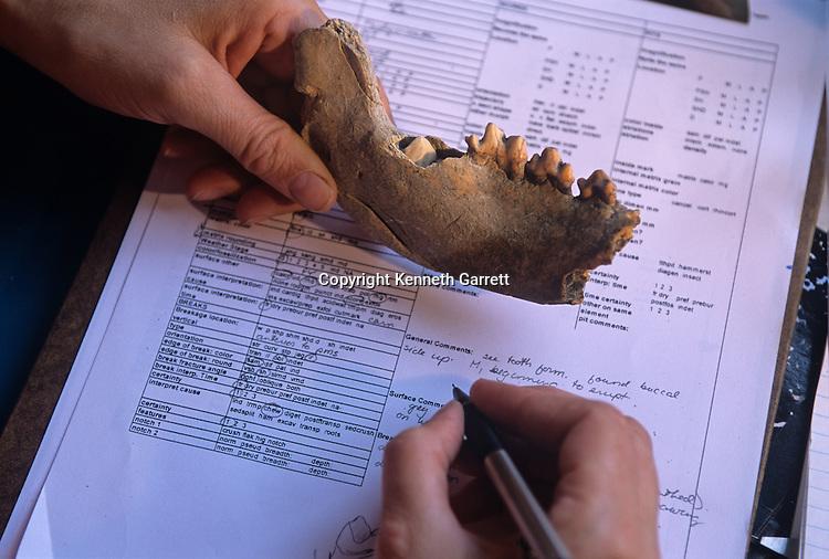 Dmanisi, Georgia, David Lordkipanidze, Homo Erectus, 1.8 Million years ago