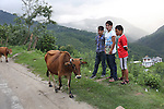 Youths dressed in modern clothes, watch as a farmer drives his cattle past. How long will they want to stay living in the rural areas? Punakha, Bhutan..Bhutan the country that prides itself on the development of 'Gross National Happiness' rather than GNP. This attitude pervades education, government, proclamations by royalty and politicians alike, and in the daily life of Bhutanese people. Strong adherence and respect for a royal family and Buddhism, mean the people generally follow what they are told and taught. There are of course contradictions between the modern and tradional world more often seen in urban rather than rural contexts. Phallic images of huge penises adorn the traditional homes, surrounded by animal spirits; Gross National Penis. Slow development, and fending off the modern world, television only introduced ten years ago, the lack of intrusive tourism, as tourists need to pay a daily minimum entry of $250, ecotourism for the rich, leaves a relatively unworldly populace, but with very high literacy, good health service and payments to peasants to not kill wild animals, or misuse forest, enables sustainable development and protects the country's natural heritage. Whilst various hydro-electric schemes, cash crops including apples, pull in import revenue, and Bhutan is helped with aid from the international community. Its population is only a meagre 700,000. Indian and Nepalese workers carry out the menial road and construction work.