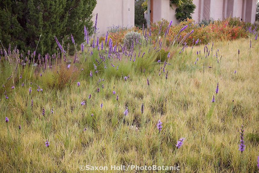 Holt 923 photobotanic stock photography garden for Short grasses for landscaping
