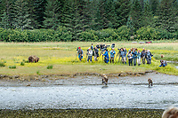 Several large groups of photographers gather to make phogtos of Alaska coastal brown (grizzly) bears in Lake Clark National Park Alaska.  Summer. <br /> <br /> Photo by Jeff Schultz/SchultzPhoto.com  (C) 2018  ALL RIGHTS RESERVED