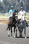 27 June 2009: Zenyatta and Mike Smith win the Vanity Handicap (GI) at Hollywood Park in Inglewood, CA