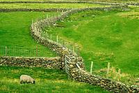 Stone fence in Connamara National Park, Ireland