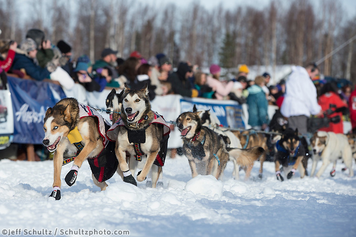 Allen Moore's lead dogs lunge in the start chute on Willow Lake during the re-start of the Iditarod sled dog race Sunday, March 3, 2013.