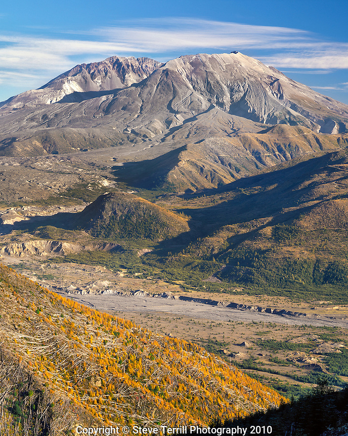 Mt St Helens with Toutle River and Fall foliage in Mt St Helens National Volcanic Monument washington