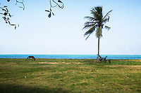 A horse on the beach in Luquillo, Puerto Rico on 3rd January 2012.
