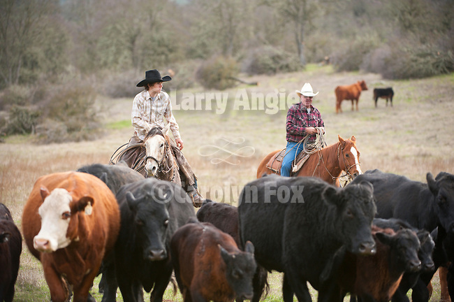 """Cattle marking at the Yeager and 110 ranches along Stony Creek Road with the Dell""""Orto Ranch"""
