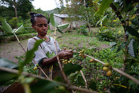 May 3rd, 2012_ LACLUBAR, TIMOR-LESTE_ Residence of the mountain town of Laclubar, pick organic Timor Arabica coffee cherry at the start of the harvest season.  Coffee is an important agricultural crop for the residence of this remote mountain village.  Photographer: Daniel J. Groshong/The Hummingfish Foundation