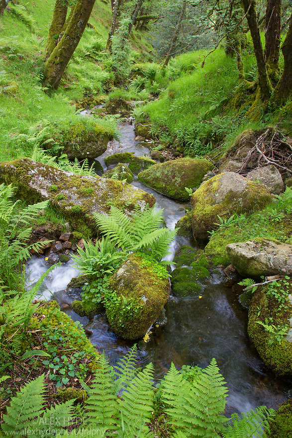 The River Dart running through Dart Valley Nature Reserve. Dartmoor, Devon, UK. June.