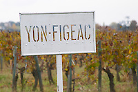 Vineyard. Chateau Yon-Figeac. Saint Emilion, Bordeaux, France