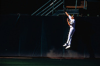 OAKLAND, CA - Johnny Damon of the Oakland Athletics makes a catch at the wall during a game at the Oakland Coliseum in Oakland, California in 2001. Photo by Brad Mangin
