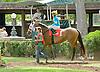 Filare l'Oro before The Walking in Da Sun Stakes at Delaware Park on 7/11/12