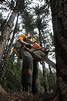 140310 Worksafe NZ - Nelson Forestry