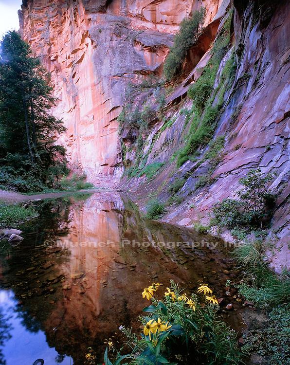 """West Fork, Oak Creek Canyon   ARIZONA"""