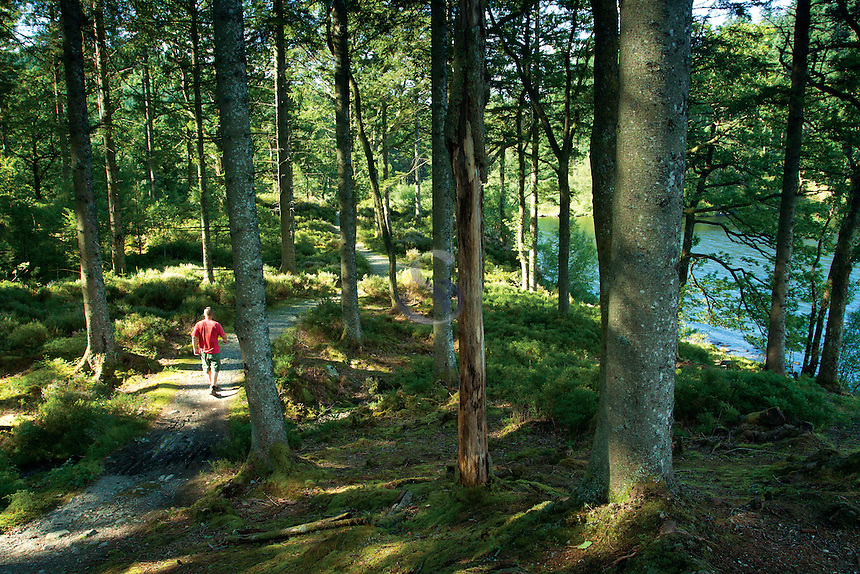 Walking through Loch Ard Forest beside Loch Ard, Loch Lomond and the Trossachs National Park, Stirlingshire
