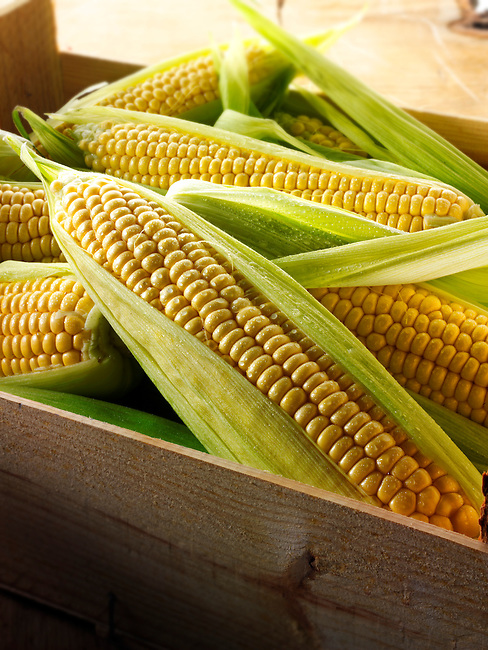 Fresh cobs of Maize, Corn Sweetcorn photos