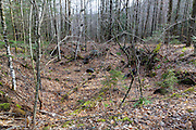 An abandoned cellar hole along an old road off Tunnel Brook Road in Benton, New Hampshire. This area was once known as Coventry, and based on an 1860 historical map of Grafton County this was the Charles B. Keyser homestead.