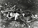 Undated - Imperial Japanese soldiers dead in the Guadalcanal Campaign, also known as the Battle of Guadalcanal at Tarawa in 1942. It was fought between August 7, 1942 and February 9, 1943 around the island of Guadalcanal in the Pacific theatre of World War II. (Photo by Kingendai Photo Library/AFLO)
