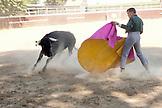 USA, California, Toreador Dennis Borba fighting a bull at his bullfighting school in Escalon