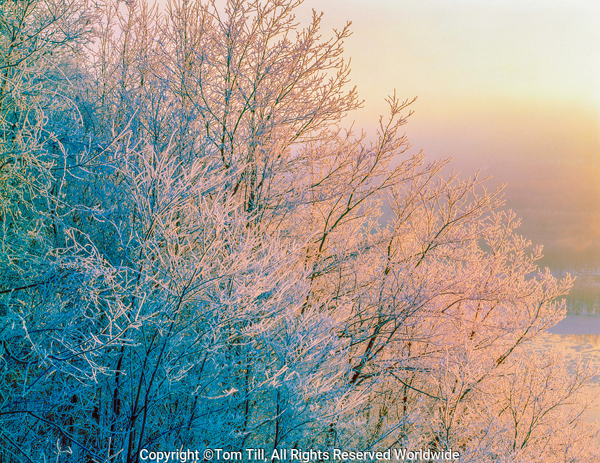 Icy trees at dawn, Upper Mississippi National Wildlife Refuge, Iowa, Pikes Peak State Park, Mississippi River