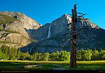 Yosemite Falls in Spring and Dead Tree in Cook's Meadow at Sunrise, Yosemite National Park