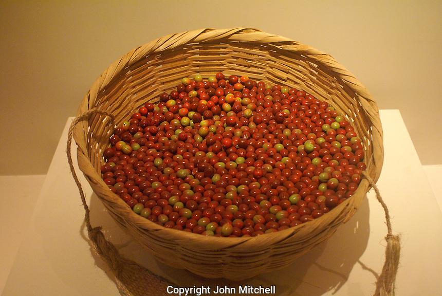 Basket filled with ripe coffee beans, Museo Nacional de Antropologia David J. Guzman in San Salvador, El Salvador