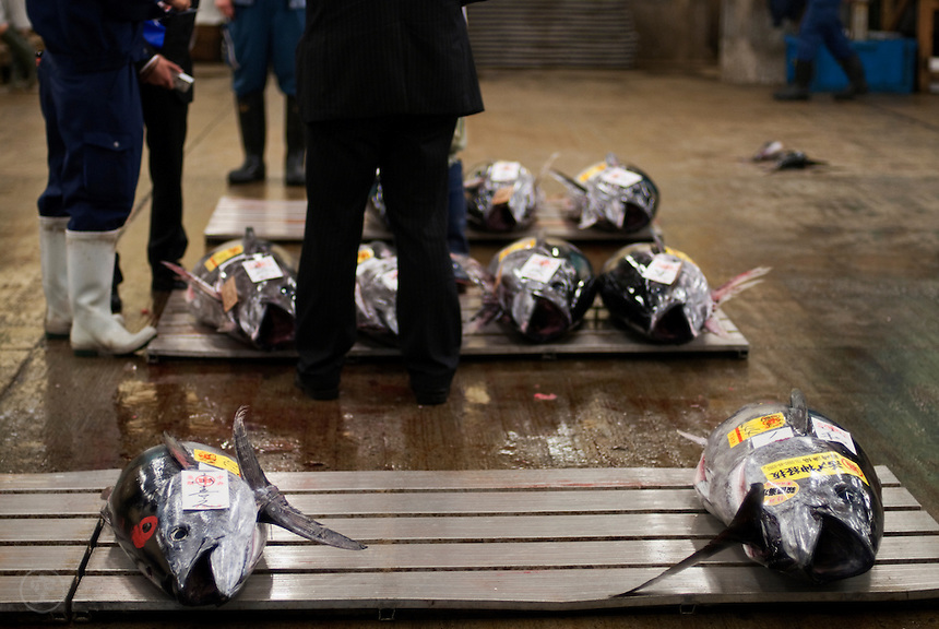 Fresh tuna auction at the Tokyo Central Wholesale Markets, Tsukiji