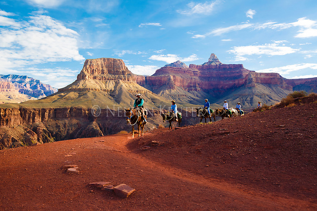 a scenic mule ride in the grand canyon above phantom ranch