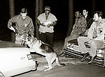 While Tallahassee Police Department canine officer Mark Peavy 's (L) police dog alerts on the trunk of suspected drug dealer Fat Freddie (C) as he stands and watches with his box of fried chicken, other Tallahassee Police vice officers sit on the hood of one of the undercover vehicles and watch.