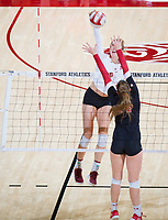 STANFORD, CA - November 4, 2018: Holly Campbell at Maples Pavilion. No. 2 Stanford Cardinal defeated the Utah Utes 3-0.