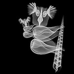 X-ray image of a koala (white on black) by Jim Wehtje, specialist in x-ray art and design images.
