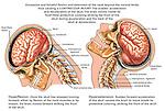 Whiplash Neck Injury - Cervical Hyperflexion-Hyperextension, Coup-contrecoup.