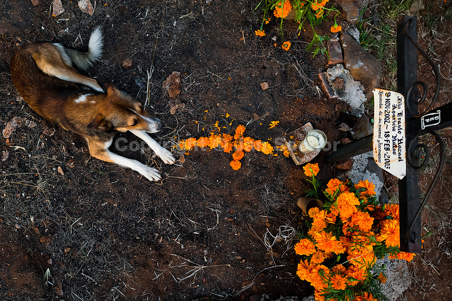 A dog lies at the flower-decorated grave of a child during the Day of the Dead celebration in Tzintzuntzan, Michoacán, Mexico, 2 November 2014. Day of the Dead ('Día de Muertos') is a syncretic religious holiday, celebrated throughout Mexico, combining the death veneration rituals of the ancient Aztec culture with the Catholic practice. Based on the belief that the souls of the departed may come back to this world on that day, people gather on the gravesites praying, drinking and playing music, to joyfully remember friends or family members who have died and to support their souls on the spiritual journey.