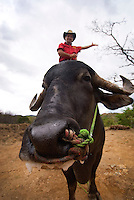 World Champion Bull and his proud owner standing on bull's back, Boquete, Panama