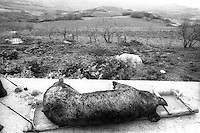 """The """"killing pork"""" rite. Farmers use to quickly burn tha pork to remove bristles."""