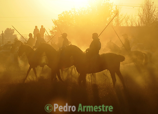 Riders take part in the 'El toro de la Vega' (The bull of the plain) bullfight, on September 16, 2008 in Tordesillas, near Valladolid, © Pedro ARMESTRE.