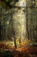 Nederland, Rhenen, 26 okt 2003.Bos op de Grebbeberg. Herfstbos, herfstkleuren, landschap...Foto (c) Michiel Wijnbergh/Hollandse Hoogte