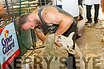 Patsy Randles Kilgarvan in acton at the Top of Coom Shearing on Sunday.