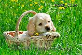 Marek, ANIMALS, REALISTISCHE TIERE, ANIMALES REALISTICOS, dogs, photos+++++,PLMP3154,#a#, EVERYDAY